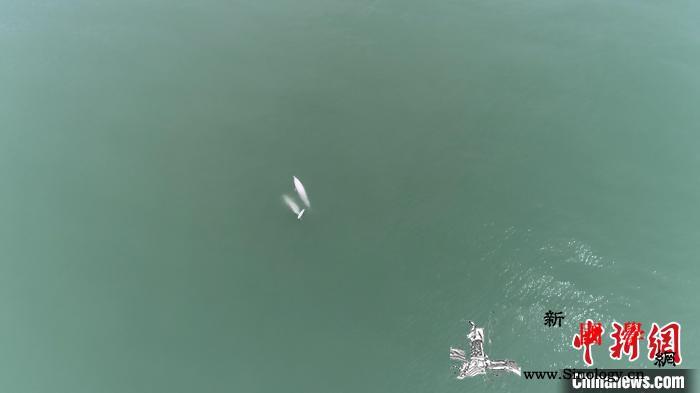 中华白海豚保护区巡护首次引入无人机高_无人机-妈祖-科院-