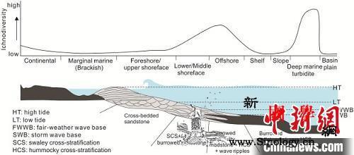 中外科学家对二叠纪-三叠纪之交遗迹化_化石-遗迹-复苏-