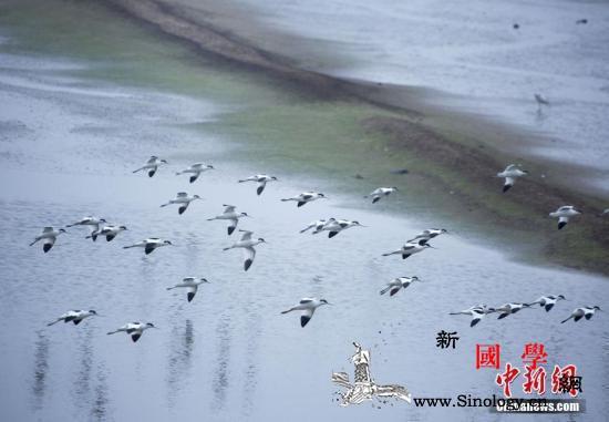 鄱阳湖高水位对湿地及越冬候鸟有何影响_鄱阳湖-江西省-江西-