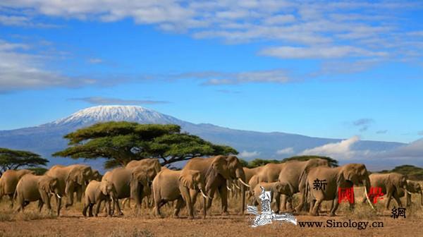 """疫情下的坦桑尼亚旅游业:政府""""带疫""""_坦桑尼亚-国家旅游局-疫情-旅游业-"""