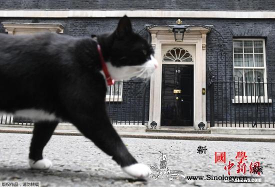 """萌猫""""退休""""!英外交部""""首席捕鼠官""""_外交部-捕鼠-英国-"""