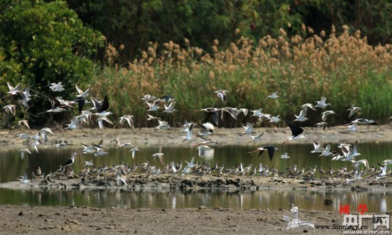 珠三角地区拟建19条水鸟生态廊道_滩涂-林业局-廊道-