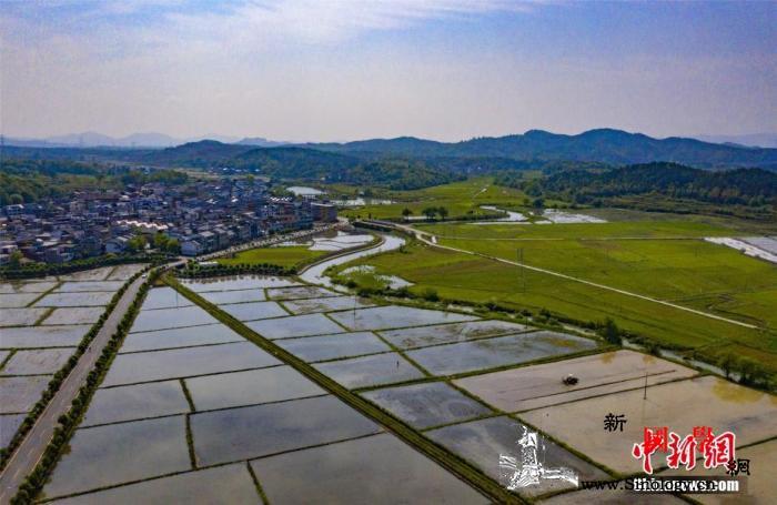农业农村部:今年早稻预计增产生猪恢复_早稻-生猪-晚稻-
