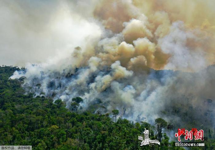 巴西潘塔纳尔湿地8月记录近6000起_浓烟滚滚-巴西-湿地-