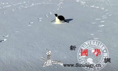 """最萌""""陪聊""""!帝企鹅一路跟随南极探险_罗斯-南极-澳大利亚-"""