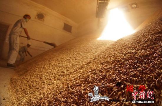 联合国粮农组织呼吁停止粮食损失与浪费_粮农组织-粮仓-粮库-