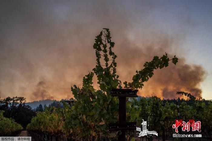 美加州创纪录山火蔓延超100万英亩一_加州-山火-葡萄酒-