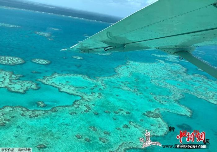 警惕!25年来大堡礁珊瑚数量下降超_白化-澳大利亚-珊瑚-