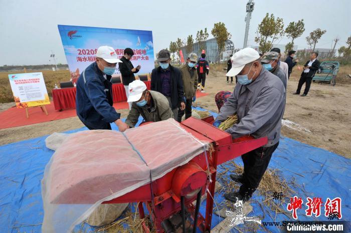 中国十万亩海水稻完成产量测评平均亩产_脱粒-盐碱地-亩产-