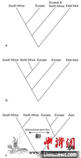 最新研究:百万年前东亚洞穴鬣狗与非洲_鬣狗-东亚-基因组-