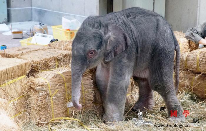 日本上野动物园诞生大象宝宝为1882_首次-动物园-日本东京-