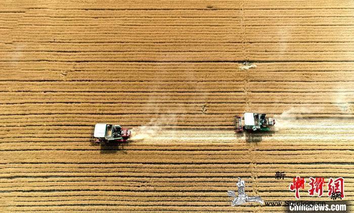 专家:中国粮食供应有保障价格上涨难持_稻谷-籼稻-玉米-