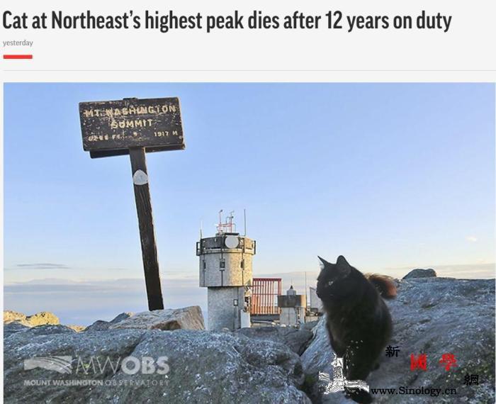 这只吉祥物猫咪过世了它曾巡逻美国东_华盛顿-美国-吉祥物-