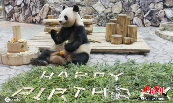 日本和歌山县双胞胎大熊猫6岁啦!获赠_雌性-日本-共同社-