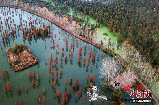 国家发改委:长江流域水质优良断面比例_长江流域-水杉-呈现出-