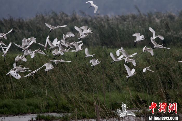践行生态优先绿色发展湖南筑牢长江腹地_沅江-洞庭湖-长江-
