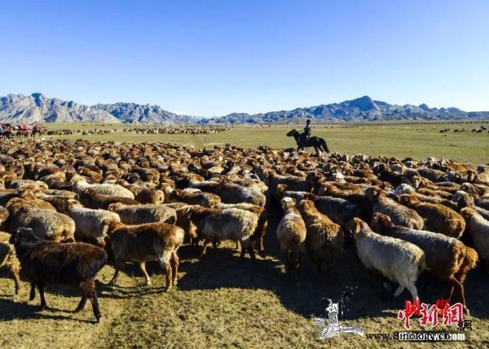 中国民族区域自治的新疆实践:千年绝对_阿勒泰-哈萨克族-温觉-