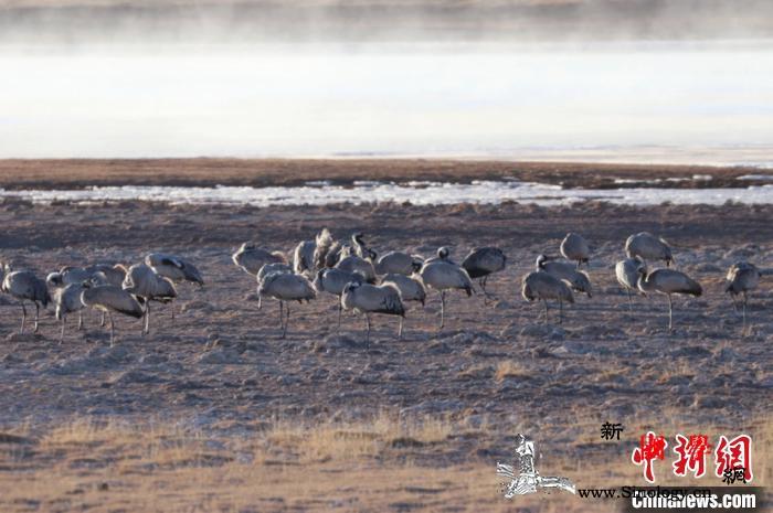 """黄河源头玛多绘就""""人与自然和谐共生的_河源-宣传部-玛多-"""