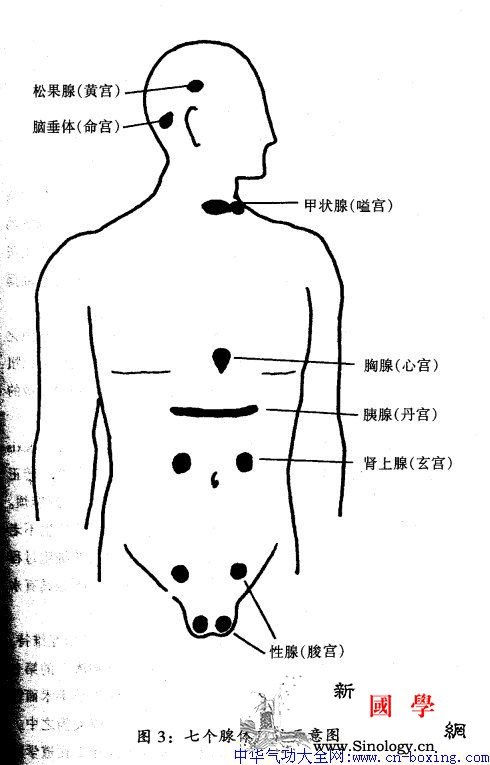 鹿功鹤功龟功_雄鹿-腺体-精气-前列腺-