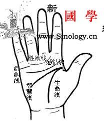 手掌的基本纹路占断_上有-生命线-纹路-食指-