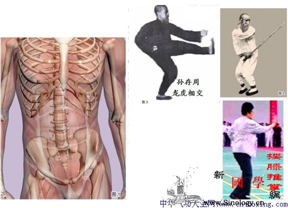 养腰而用胯-孙玉奎_骶骨-脏腑-躯干-腰椎-
