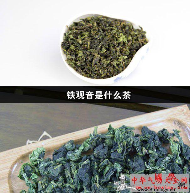 铁观音是什么茶_铁观音-龋齿-茶树-乌龙茶- ()
