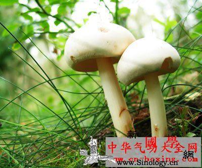 松酒_松节-培养液-杆菌-乙醇-