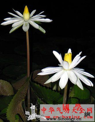 葶苈酒_桑白皮-腹水-雄鸡-遍体- ()
