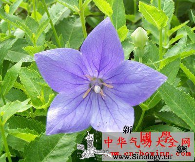 仙酒方_赤峰-桔梗-沂源县-产区-