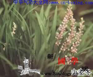 山麦冬_韧皮部-木质部-棕黄-麦冬-