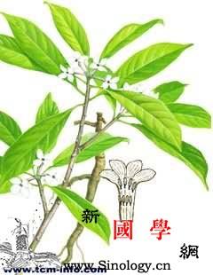 软皮树_株距-柔毛-瑞香-卵形-