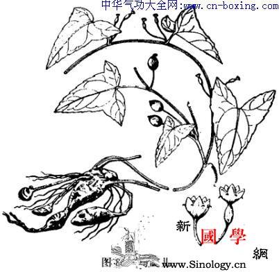 马交儿_裂片-块根-卵形-基部- ()