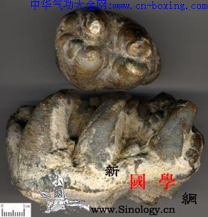 龙齿_日华-珐琅质-磷灰石-臼齿-
