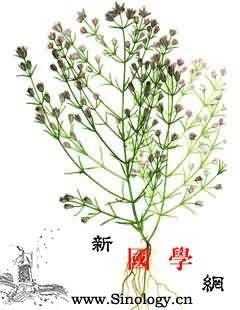 滇獐牙菜_至正-青叶胆-音名-裂片-