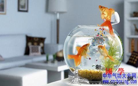 阳台养鱼风水阳台适合养鱼吗_养鱼-风水-阳台-鱼缸-