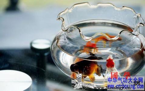 养鱼风水六条建议_吉时-养鱼-风水-鱼缸- ()