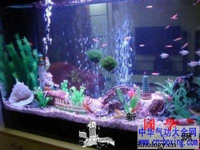 家居风水学中注意养鱼的禁忌详解_吉星-养鱼-风水-水气-