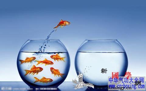 养鱼风水学_文昌-养鱼-家宅-风水-
