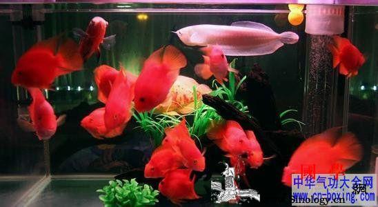 家居养鱼风水知识攻略集锦_三星-养鱼-玻璃缸-风水-
