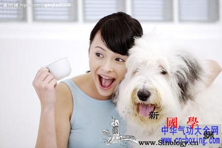 养宠物的风水讲究宠物屋的摆放位置风水_风水-宠物-摆放-文昌-