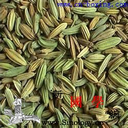 小茴香的功效与作用_茴香-理气-功效-睾丸-