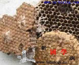 蜂房的功效与作用_杀虫-鹅掌风-胡蜂-蜂房-