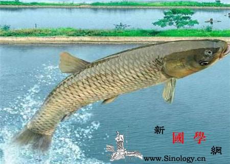 哺乳期妈妈可以吃鱼吗_哺乳期-蓄积-鱼类-哺乳-