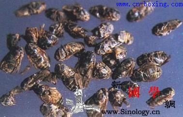 虻虫的功效与作用_日华-蚂蜂-牛蝇-牛虻- ()