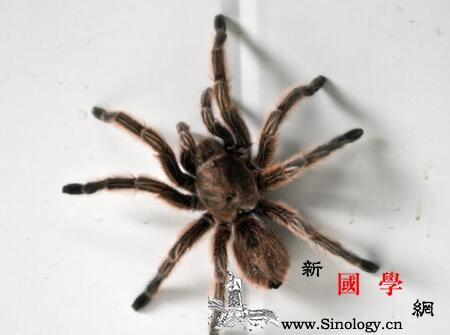 宝宝被蜘蛛咬了怎么办小孩被蜘蛛咬到宝妈不管_阿司匹林-咬伤-咬了-服用-