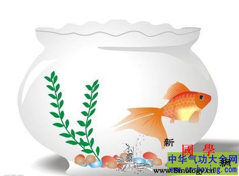 鱼缸在风水布局中有哪些禁忌_鱼缸-炉灶-摆放-居室-
