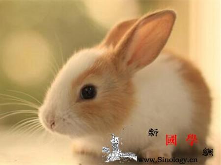 孕妇梦见兔子是什么意思_生下-会很-预示-孕妇-
